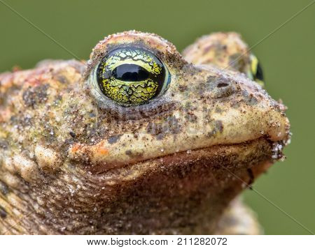Amphibian Head with big eyes and Green forest Background