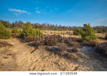 Heather And Sand In The Veluwe Area