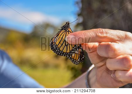Monarch Butterfly Tagging in Cades Cove, Great Smoky Mountains National Park