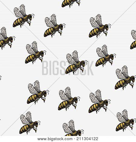 Hand Drawn Wasp