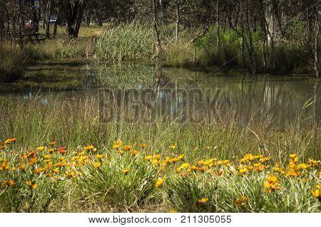 wild flowers beside water in countryside in Australia