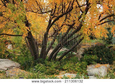 Autumn landscape of sunny October autumn park in nice weather