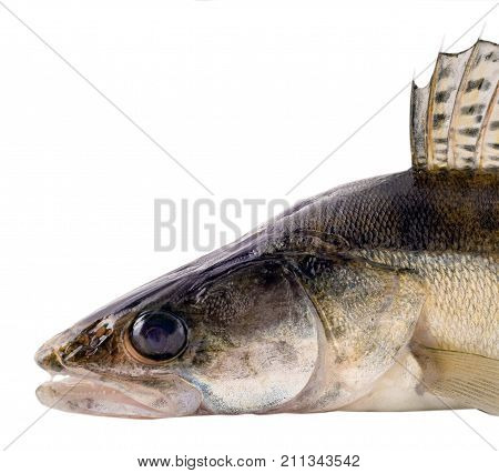 Zander Fish Scales And Fin