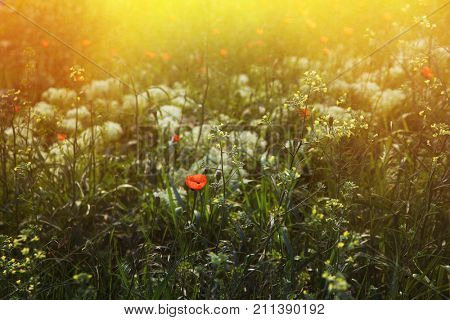 Flowers on the sunny field