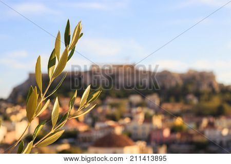 Olive twig on abstract Acropolis rock background. Athens, Greece.