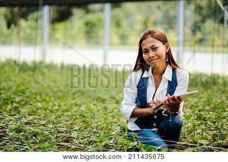 Young pretty Asian woman agronomist with tablet working in greenhouse inspecting the plants.