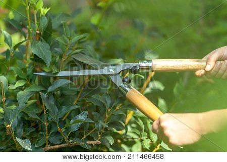 Garden bushes scissors trim trimming green activity