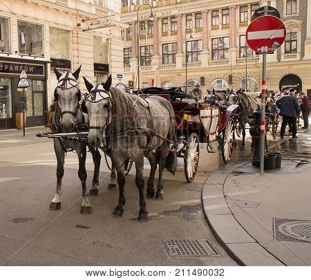 VIENNA AUSTRIA - OCTOBER 04 2017 : Pair of carriage horses waiting in the queue near the main historical square