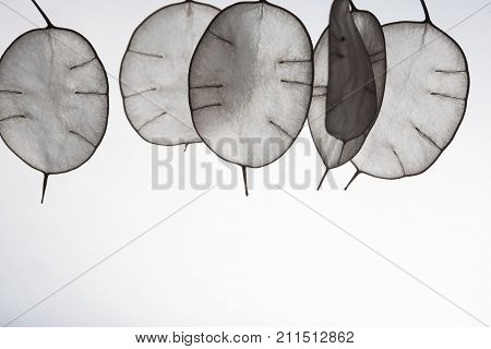 Unusual leaves with a tip in backlight. Texture of leaves isolated on white background. ecological style natural materialsbranch with leaves