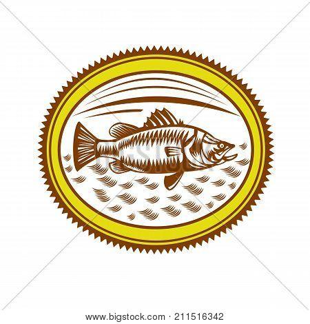 Retro style illustration of Saltwater Barramundi or barramundi Asian sea bass (Lates calcarifer) a species of catadromous fish set inside Rosette on isolated background.