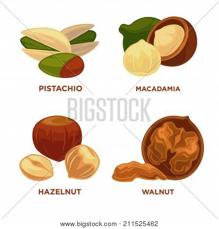 Nut set. Ripe nuts and seeds vector illustration. Various nuts. Highly detailed nut icons pestachio, macadamia, hazelnut, walnut. Vector Illustration.
