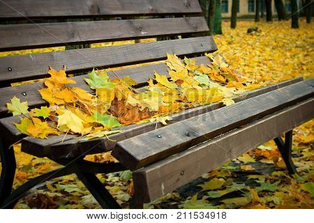 Yellow Maple leaves on a bench in the Park. Autumn in the city. Bench in the Park. Golden autumn. Walk in autumn Park. Dry foliage. Autumn Park. A carpet of yellow leaves