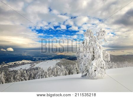Winter landscape in mountains with snow-covered fir