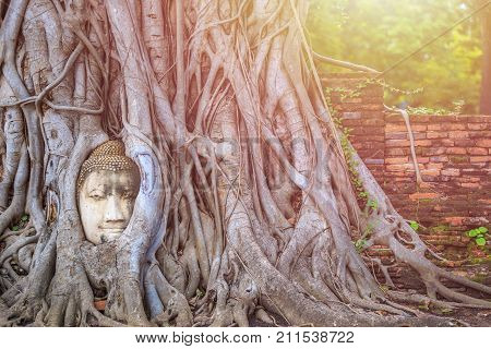 Head Of The Sandstone Buddha In Tree Root. At Ayutthaya Historical Park In Ayutthaya,thailand