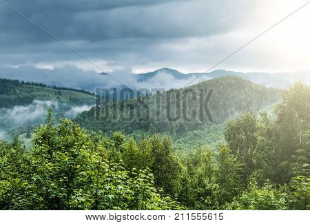 View on evergreen misty forest and top of mountains in fog. Scenery with dramatic rainy clouds.