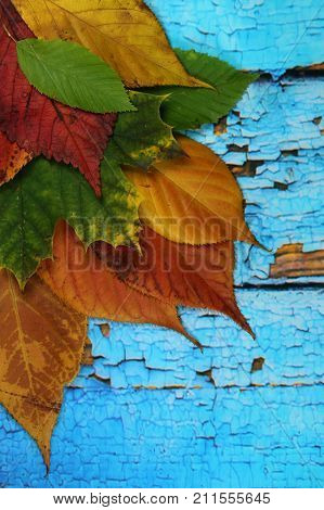 Autumnal leaves on old blue background/ Autumnal leaves on blue scraped  planks.