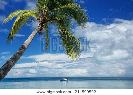 Leaning Palm Tree At The Beach, Nananu-i-ra Island, Fiji