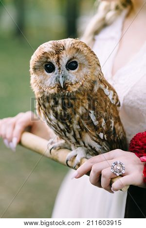 The owl sits on the girl's hand. The bride with the owl. Artwork. Selective focus on the bird
