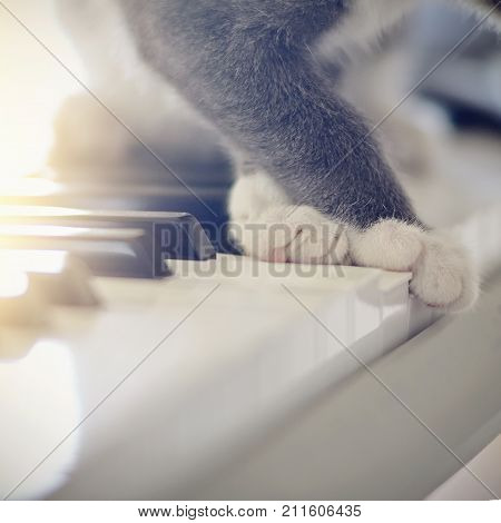 White paws of a gray cat on synthesizer keys.