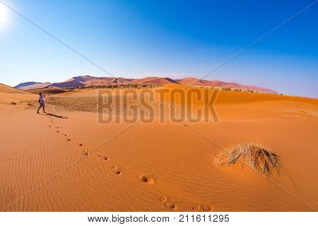 Tourist walking on the sand dunes at Sossusvlei Namib desert Namib Naukluft National Park Namibia. Traveling people adventure and vacations in Africa.