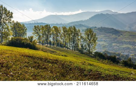 Trees On Hillside In Mountainous Countryside