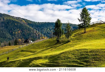 Trees On Grassy Rural Hillside