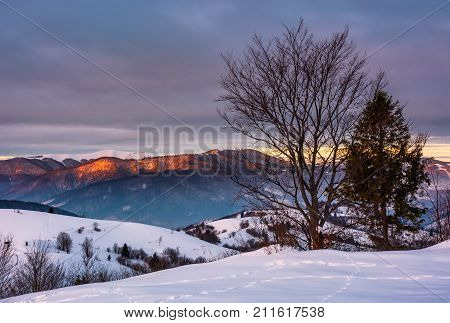 Trees On The Snow Covered Hill At Sunrise