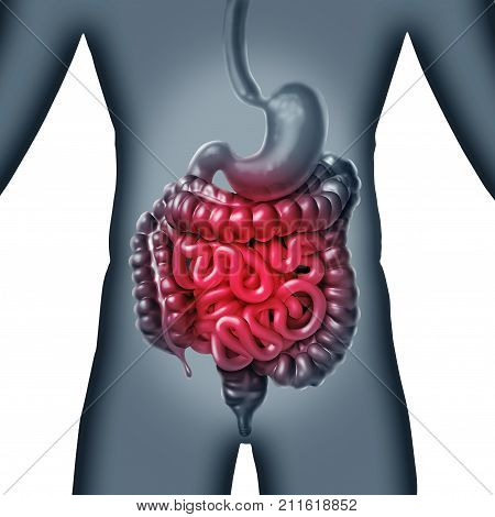 Intestinal and intestine Pain and gastrointestnal digestion inflammation problem as digestion discomfort or constipation and infection as a 3D illustration.