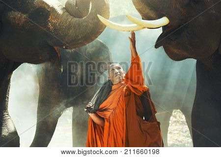 Monk and Elephant at Surin province Thailand contryside