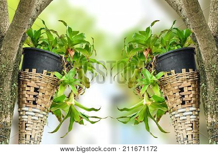 Plant In Plastic Pot On Green Nature Background