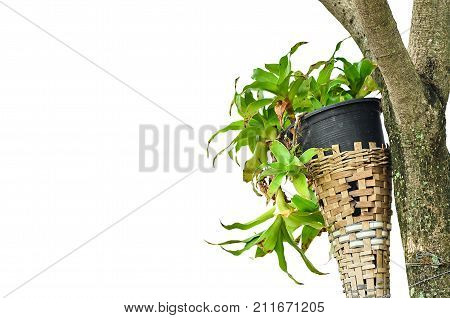 Plant In Plastic Pot On White Background