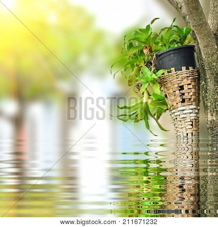 Plant In Plastic Pot On Green Nature With Reflect