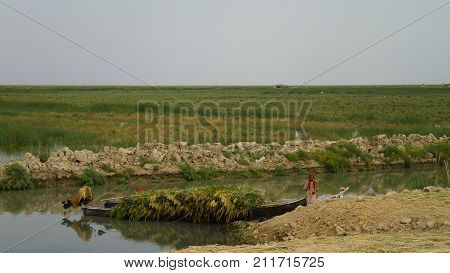 Mesopotamian Marshes habitat of Marsh Arabs aka Madans - 04-11-2011 Basra Iraq