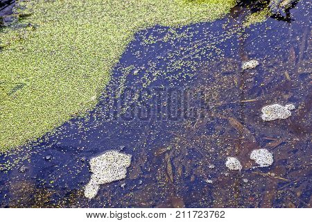 part of the water body with water and green duckweed