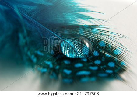 Drop of dew on a blue bird's feather with spots on white background. Abstract artistic macro photo