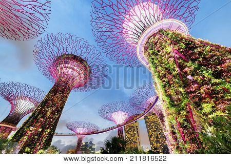 Evening View Of The Supertree Grove With The Skyway, Singapore