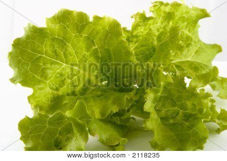 Fresh Green Lettuce From The Garden.
