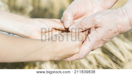 The Panorama  Of Child Hands Are Holdings The Old Human Hands. Concept Of Continuity Of Generation A