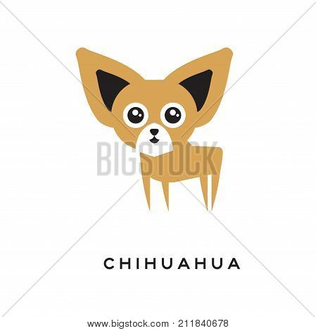 Cartoon brown and white chihuahua puppy character isolated on white background. Domestic tiny doggie with big ears and shiny big eyes. Small dog breed. Human s best friend. Flat vector illustration.