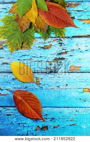 Autumnal leaves on old blue background/ Autumnal leaves on blue scraped  planks. poster