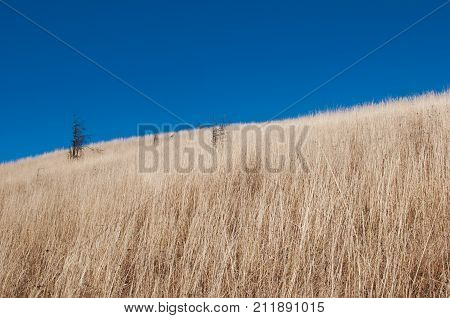 A Barren Desolate Field On A Hill With Dried Yellow Grass