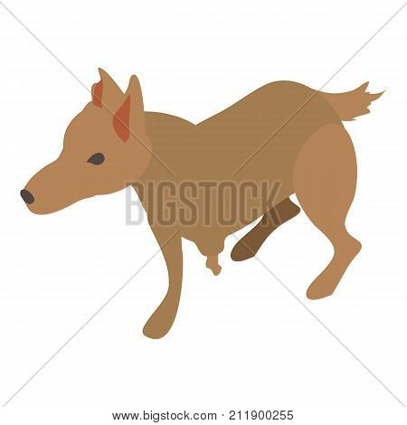 Wounded dog icon. Isometric illustration of wounded dog vector icon for web
