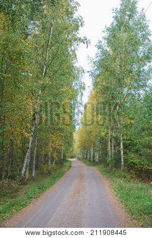 Beautiful country road in fall season colors