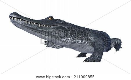 3D Rendering Alligator Caiman On White