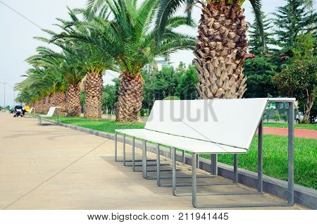 A Light-colored Bench In A Pedestrian Zone Amidst A Palm Alley.