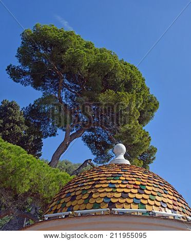 Pine Trees & Old Arhitecture on Building above the city of Nice Provence France