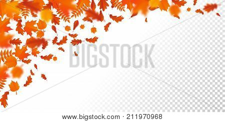 Autumn Leaf Fall Pattern Autumanl Falling Leaves On Vector Transparent Background