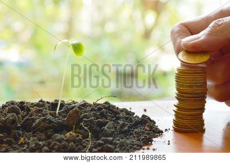hand putting gold coin arrange and little plant in dirt on wooden board