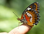 Beautiful butterfly on child finger. Insect. poster