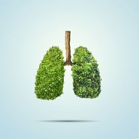 3d illustration of Green leaves shaped in human lungs. Conceptual image